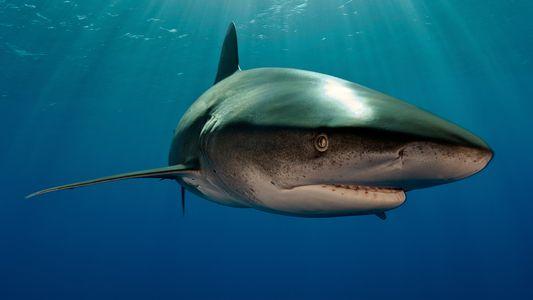 Wissen kompakt: Haie