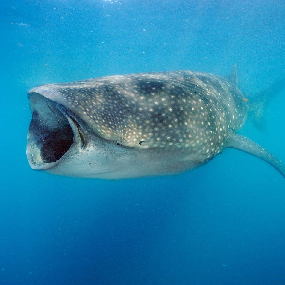 Die faszinierendsten Entdeckungen aus der Haiforschung