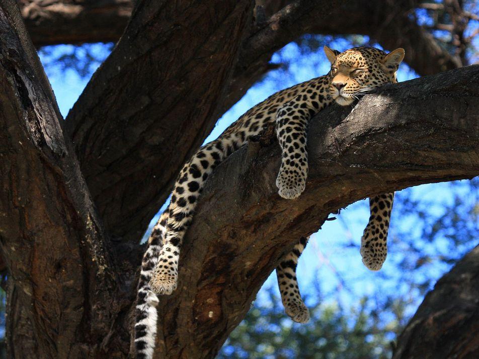 Schlafenszeit im Tierreich: 24 gemütliche Aufnahmen