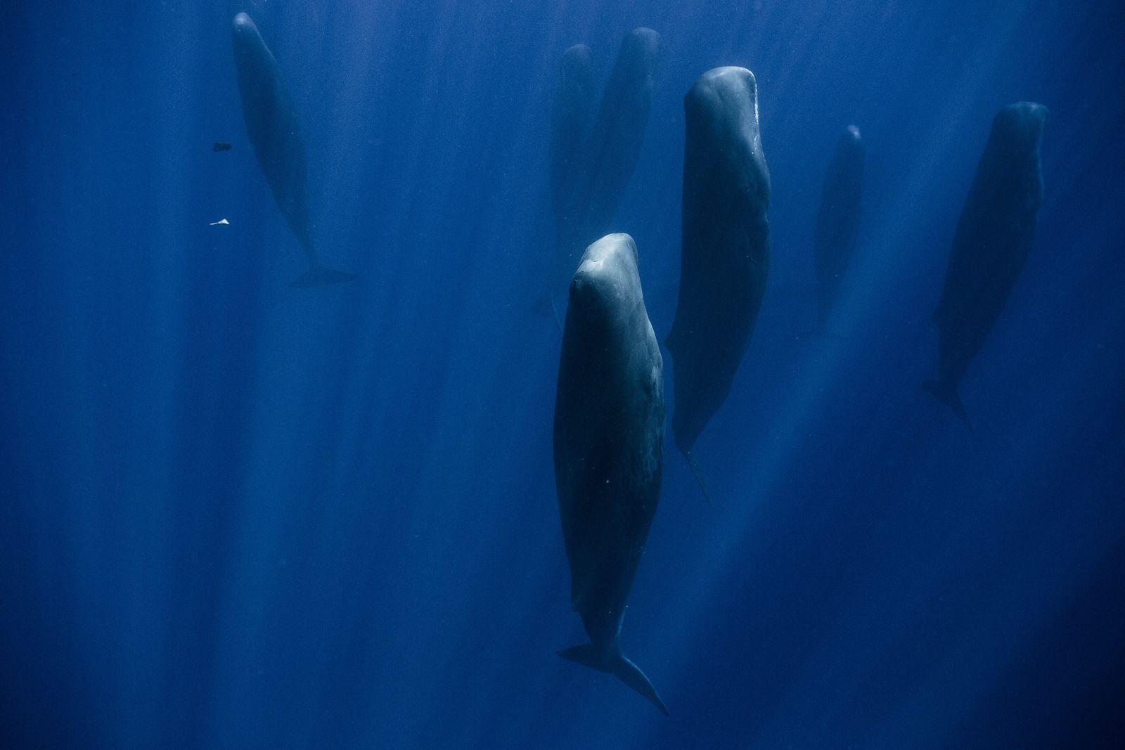 """Warum diese Wale im Meer """"stehen"""""""