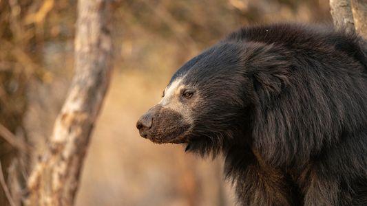 Ein Leben mit den tödlichsten Bären der Welt