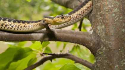 Auch Schlangen brauchen Freunde