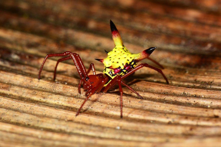 Der Hinterleib dieser Spinne erinnert an ein Pokémon