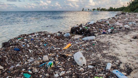 Straw Wars: Der Kampf gegen den Plastikmüll in unseren Meeren