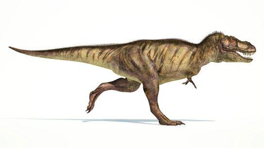 An seinem gewaltigen Körper wirken sie fast ein bisschen lächerlich, aber die 90 Zentimeter langen, mit ...