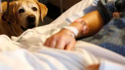 Mögen Therapiehunde ihre Arbeit?
