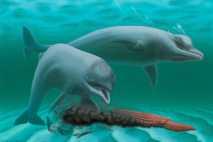 Illustration eines Delfins.
