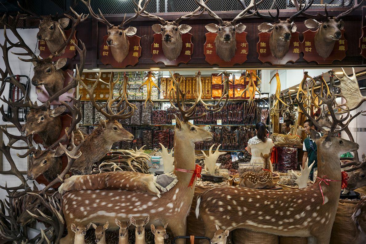 Dieser Stand auf einem Markt in der chinesischen Stadt Guangzhou bietet Hirschprodukte an, darunter Geweihe, Penisse ...