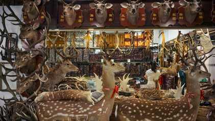 Galerie : Wie die traditionelle chinesische Medizin Tierarten gefährdet