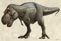 Das 1991 entdeckte Exemplar eines Tyrannosaurus rex, das den Spitznamen Scotty erhielt, wog wohl um die ...