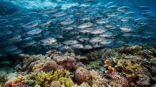 Das blühende Korallenherz der Philippinen
