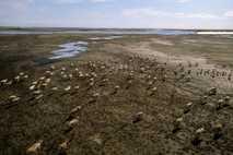 Wenn der Permafrost taut, wird das darin eingeschlossene Quecksilber in die Nahrungskette gelangen – und damit ...