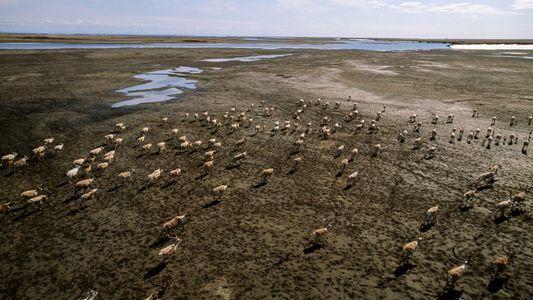 Tauender Permafrost könnte tonnenweise Quecksilber freisetzen
