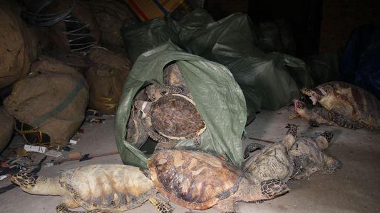 Mutmaßlicher Drahtzieher hinter Schildkröten-Schmuggel bleibt ungestört
