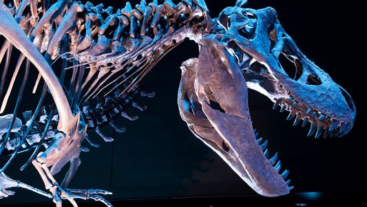 Wir wären schneller als ein T. rex