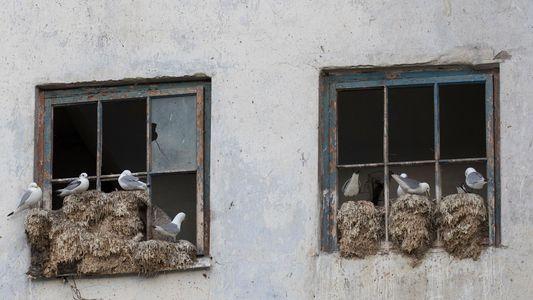 Norweger bauen Boutique-Hotels für bedrohte Meeresvögel