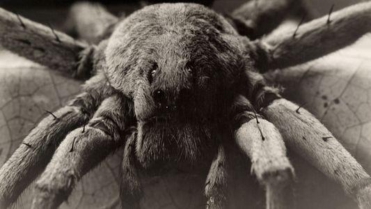 Galerie: Frühe Makroaufnahmen von Insekten & Spinnen