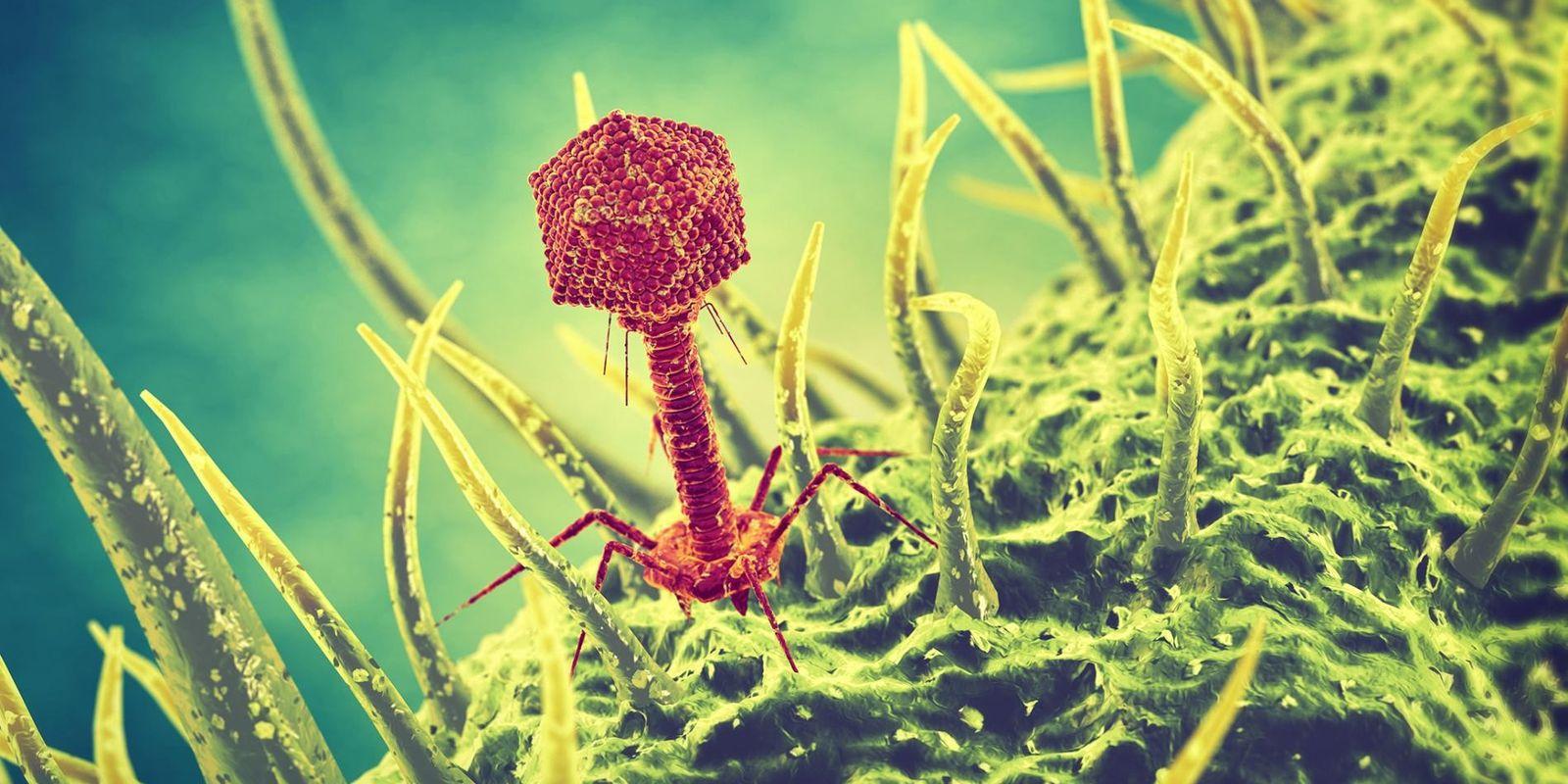 Erklärt: Wie funktionieren Viren?