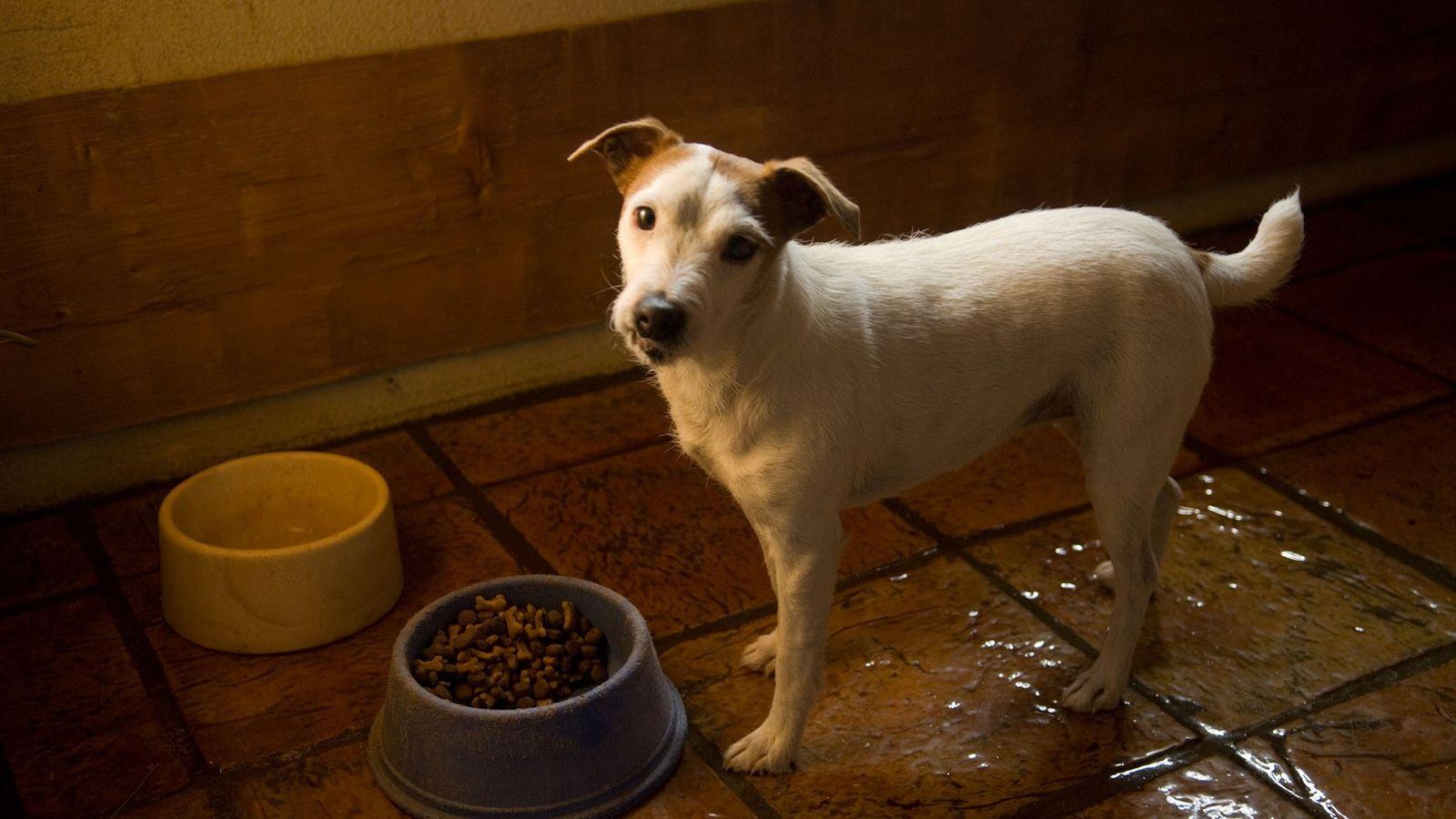 Ein Hund steht vor einem Napf in Bartlesville, Oklahoma. Hunde können territorial sein, wenn es um ...