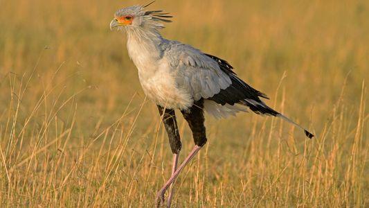 Jagd mal anders: Eigenwillige Strategien aus dem Tierreich