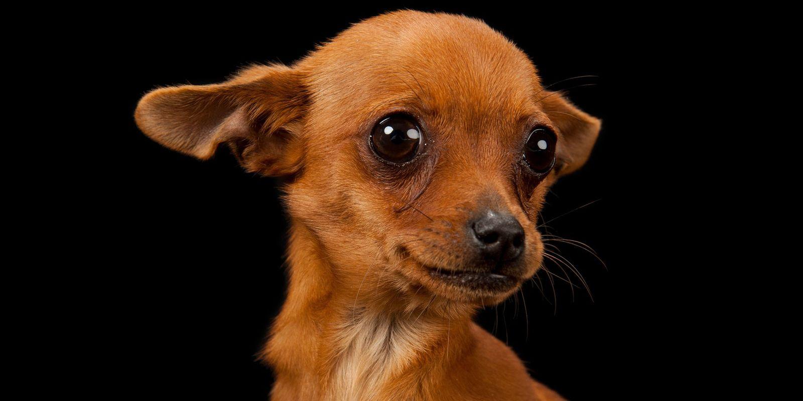 Warum Hunde Angst vor Gewittern haben – und wie wir helfen können