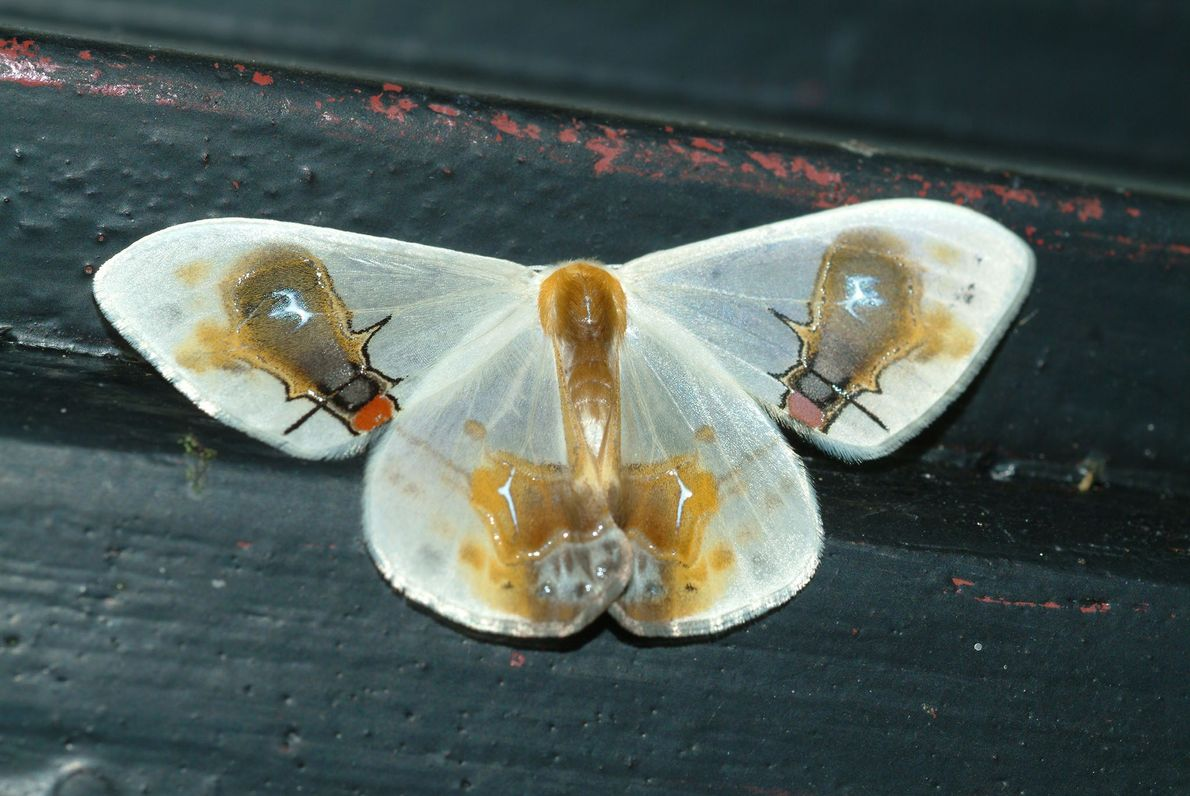 Je seltsamer, desto besser: Bizarre Überlebensstrategien von Insekten
