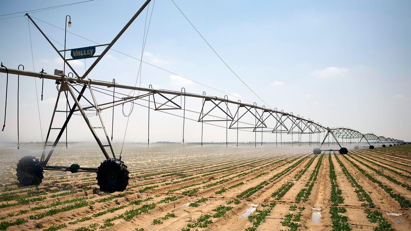 Eine große, automatisierte Bewässerungsanlage bewegt sich langsam über ein Kartoffelfeld in der ägyptischen Wüste.
