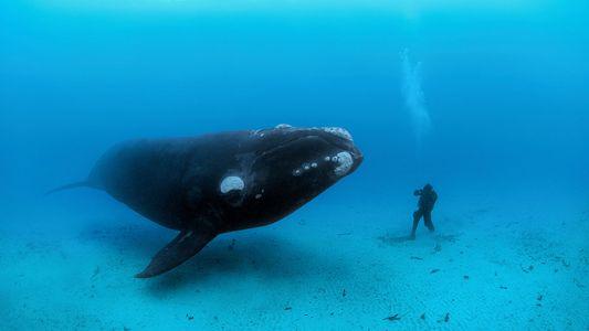 Warum werden Wale so groß?