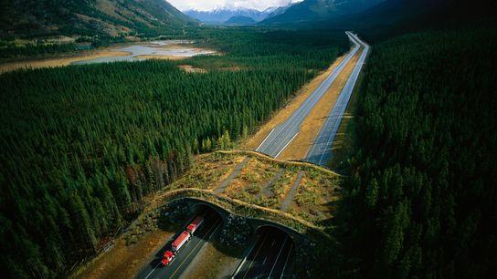 Wildbrücke am Trans-Canada Highway im Banff-Nationalpark