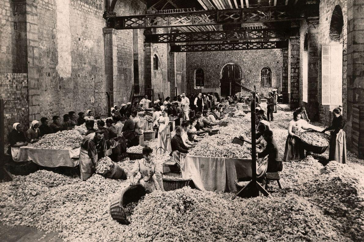 Arbeiterinnen, Notre Dame des Fleurs