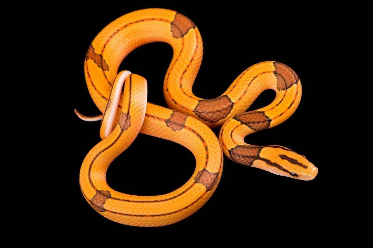 Schlange