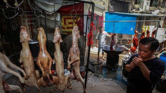 Jährliches Hundefleischfestival