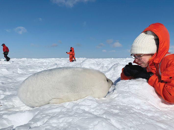 Eine Frau und ein weißes Jungtier beobachten sich gegenseitig auf dem Eis. Die Besucher dürfen sich ...