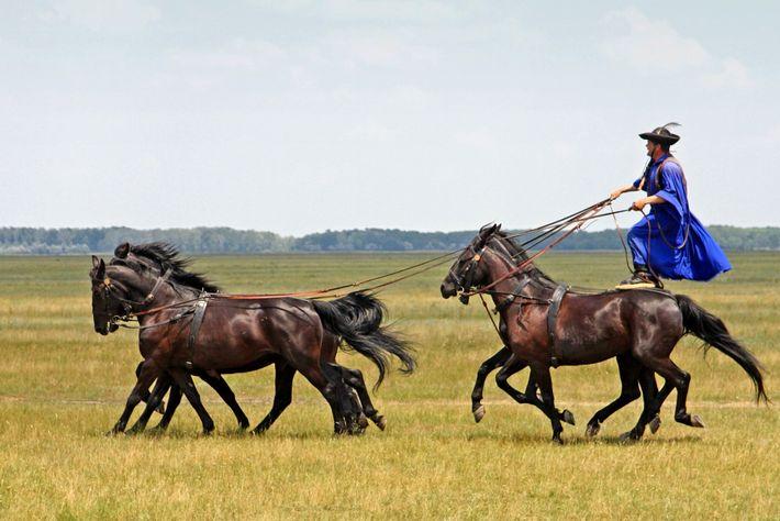 Ein ungarischer csikós (ein traditioneller Pferdehirte) zeigt seine Reitkünste im Nationalpark Hortobégy.