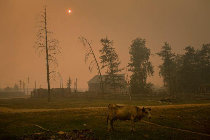 Dichte Rauchwolken über dem Dorf Kyuyorelyakh färben Himmel und Sonne rot.