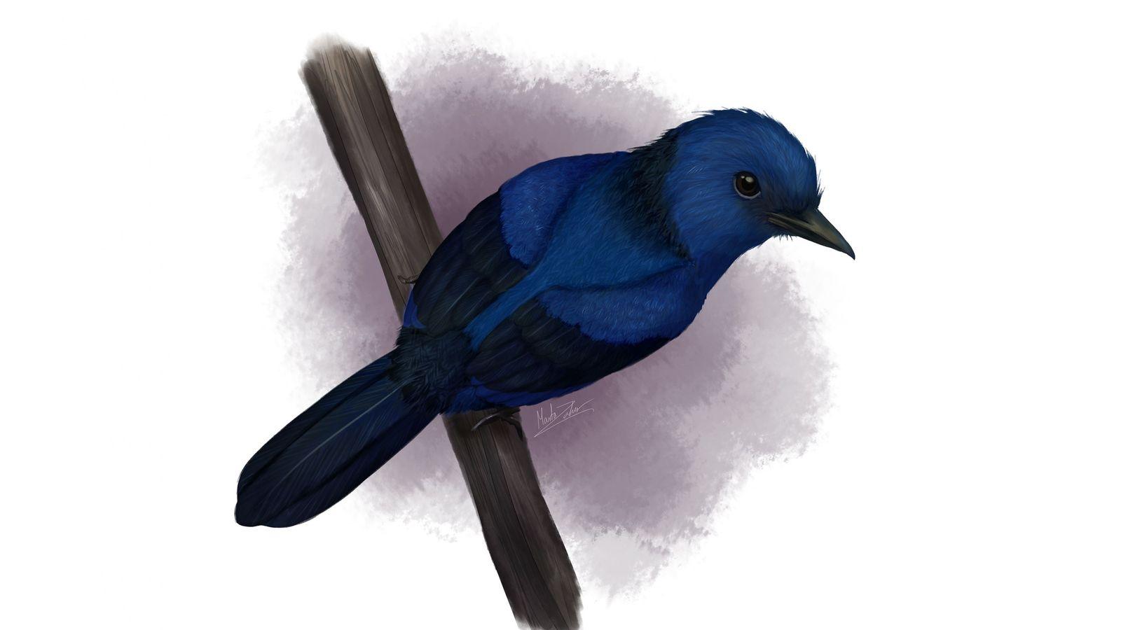 Forscher vermuteten, dass das Gefieder von Eocoracias brachyptera – einer Vogelart, die vor 48 Millionen Jahren ...