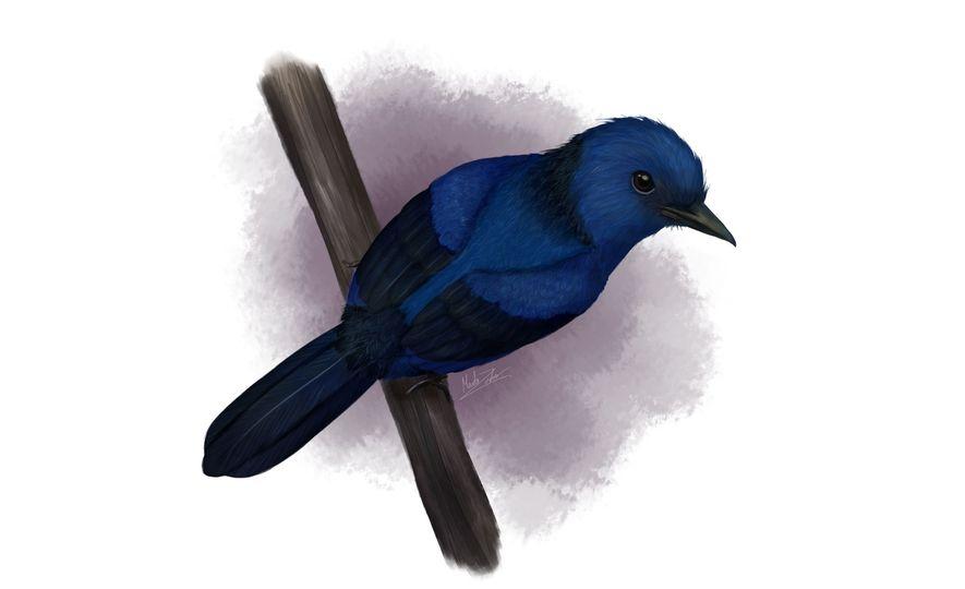 Blaues Wunder: Farbe eines Urzeitvogels dank Fossil rekonstruiert