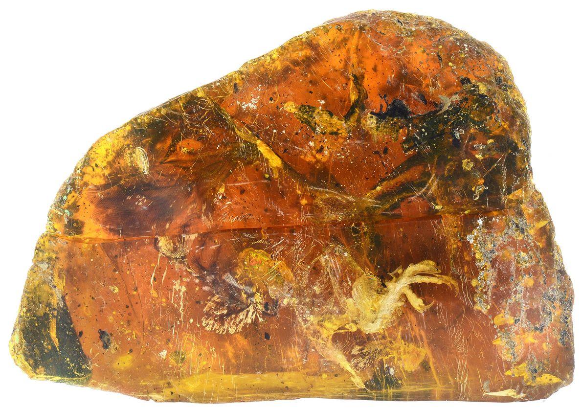 Fossil in Bernstein