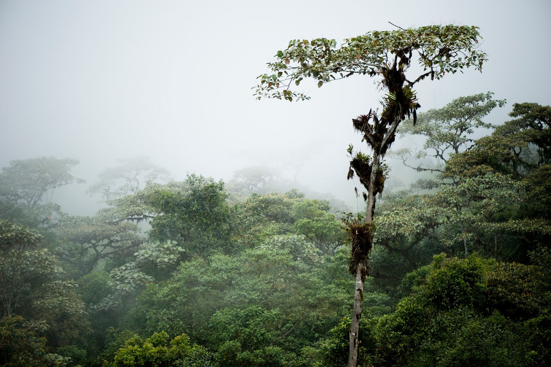 In den Nebelwäldern Ecuadors verbergen sich Spuren der Agrargesellschaft, die die Region einst bevölkerte.