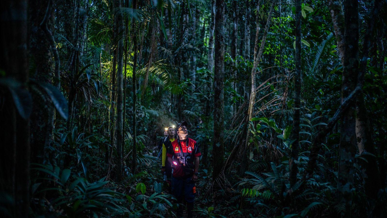 Ein Team aus Wissenschaftlern sucht in einem abgelegenen kolumbianischen Regenwald nach Eulen. Nach Jahrzehnten des Konflikts ...