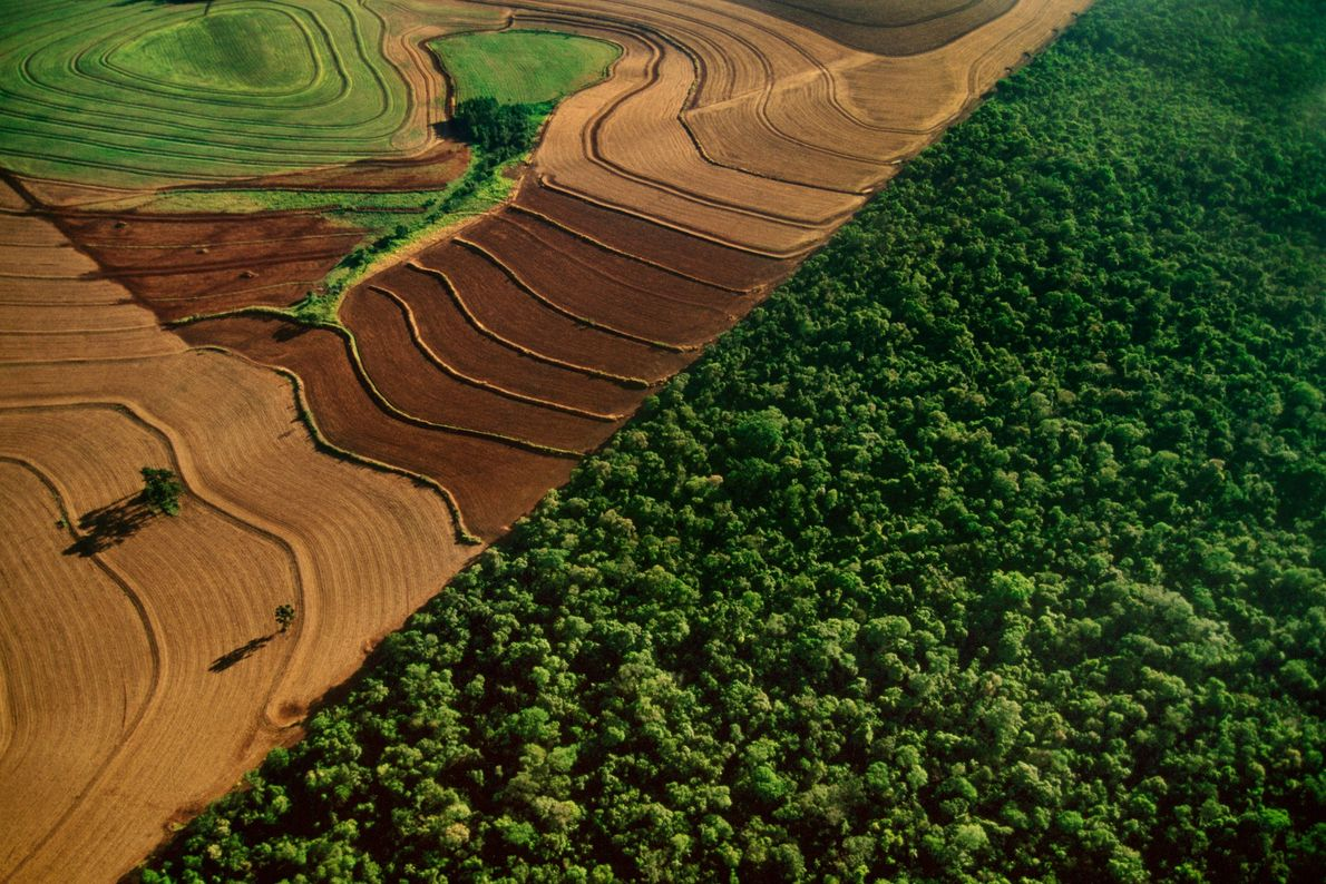 Im brasilianischen Nationalpark Iguaçu grenzen Ackerflächen an den Regenwald. Das Land hat weltweit den größten Verlust ...