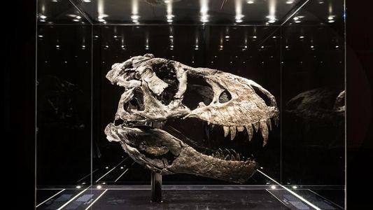 Faszinierende Fossilien: Zeitreise mit Dinosauriern in 23 Bildern