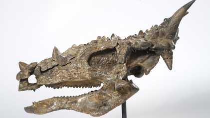 Vermeintlich vegetarischer Dinosaurier fraß wohl auch Fleisch