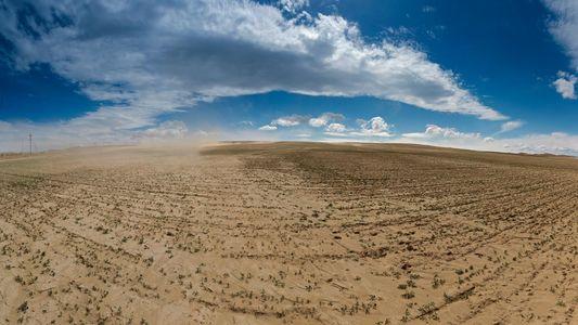 Baumringe bestätigen: Klimawandel verschärft Dürren seit 1900