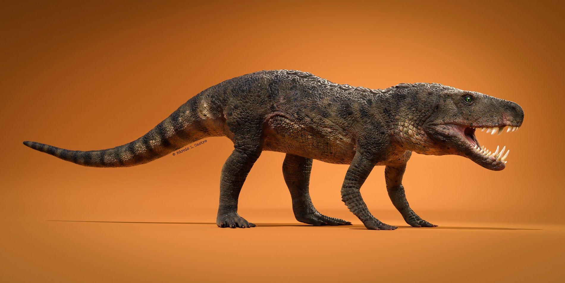Diese neu entdeckte Reptilienart namens Dynamosuchus collisensi lebte vor 230 Millionen Jahren während der Trias. Der ...