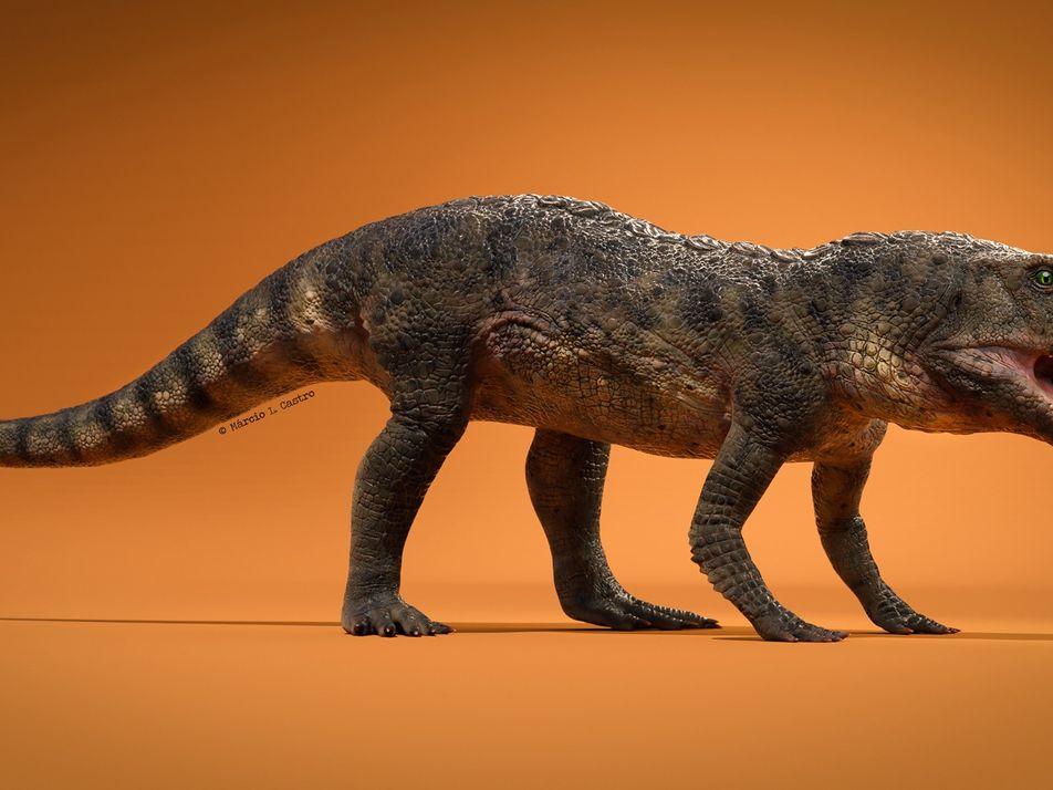 Gepanzertes Proto-Krokodil: Ein echter Knochenbrecher