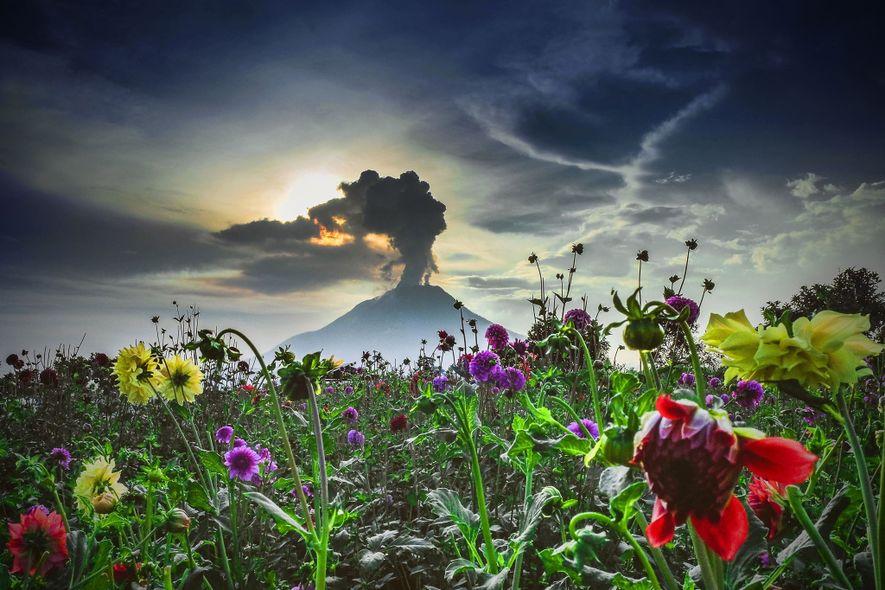 Der Vulkan Sinabung im Westen Indonesiens schlummerte für etwa 400 Jahre bevor er im August 2010 ...