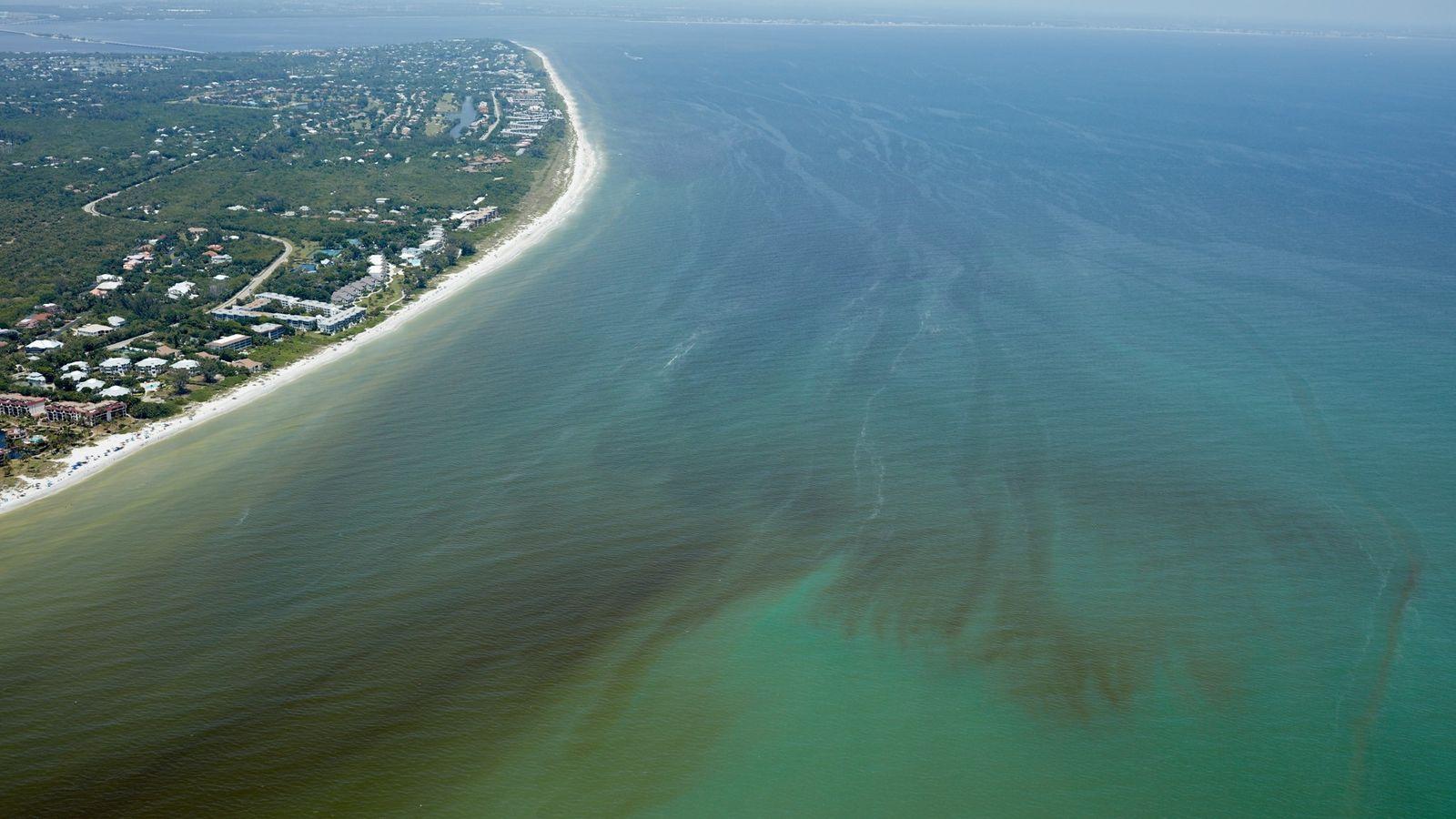 Etwa 20 Millionen Algenzellen pro Liter haben diesen Bereich vor der Südwestküste Floridas rot gefärbt. Die ...