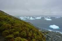 Green Island, Antarktis