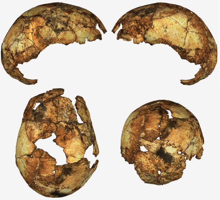Schädelfragmente eines frühen Homo erectus wurden in Südafrika entdeckt. Es war das erste Mal, dass die ...